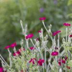 Un jardin très fleuri