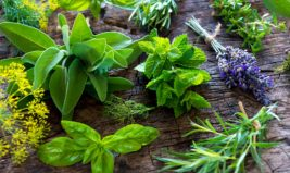 Les bienfaits des herbes aromatiques dans nos assiettes