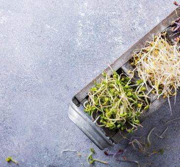 La santé passe par l'assiette : la cuisine aux graines germées, vous connaissez ?