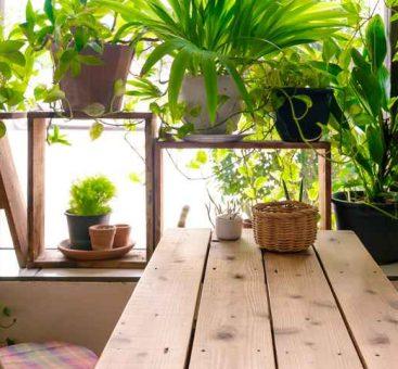 Les bienfaits des plantes dans notre intérieur!