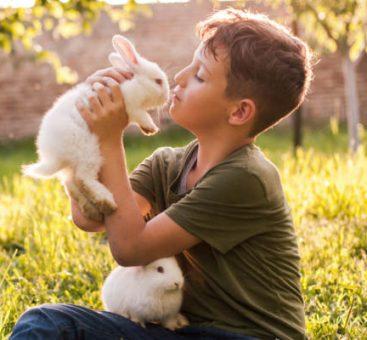 Animal de compagnie : comment prendre soin de lui au naturel ?