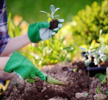 C'est parti pour les beaux jours, on se met au jardinage !