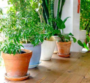 Zoom sur les plantes d'intérieur faciles à vivre !