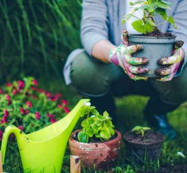 Astuces et bons réflexes: 8 conseils pour jardiner écolo