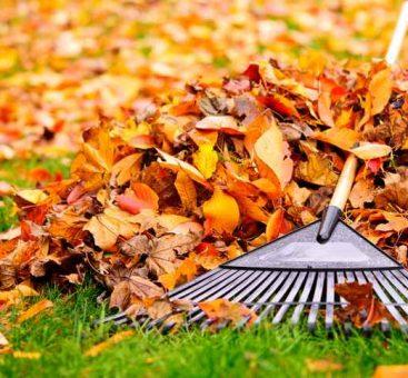 Jardinage d'automne : bien préparer l'hiver !