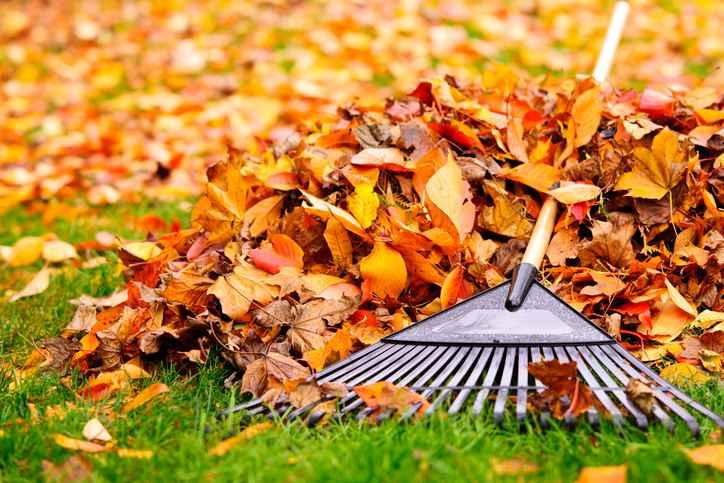 jardinage-automne