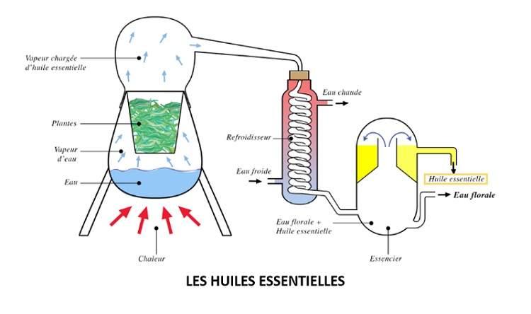 illustration-extraction-huiles-essentielles