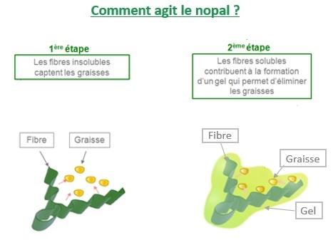 nopal-action
