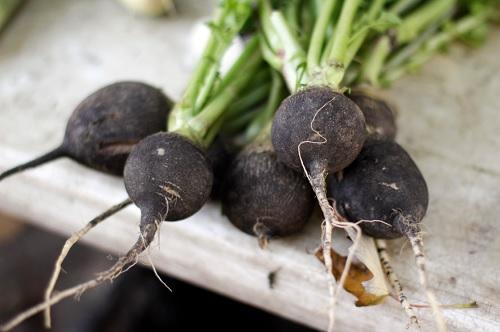 radis-noir