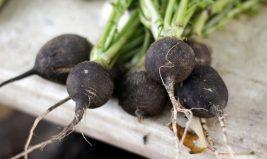 Le radis noir, des nutriments et du piquant dans l'assiette