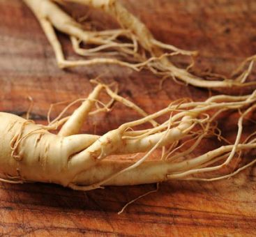 La force du ginseng
