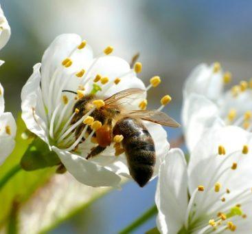 Les secrets des produits de la ruche