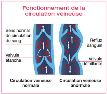 schema-circulation