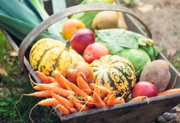 L'automne est là… ses fruits et légumes aussi !