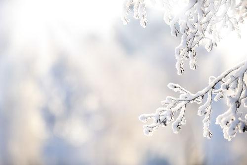 Image de la nature pendant l'hiver