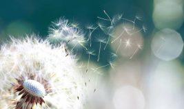 Lutter naturellement contre les allergies saisonnières