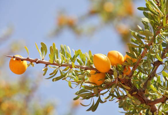 Les vertus de l'huile d'argan pour la peau