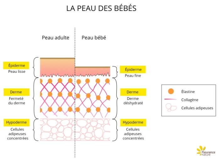 schema-peau-bebe