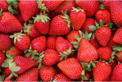 Quelle est la période pour les fraises ?