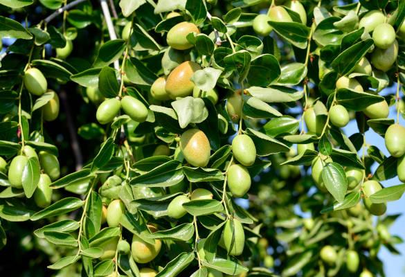Top 3 des bienfaits de l'huile végétale de jojoba